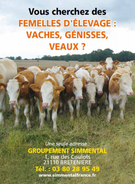 Groupement Simmental